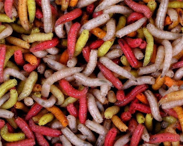 Larva barevná ( krabička 1dcl )